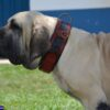 Red leather ddog collar with leopard handprint