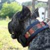 dogo-canario-collar-1