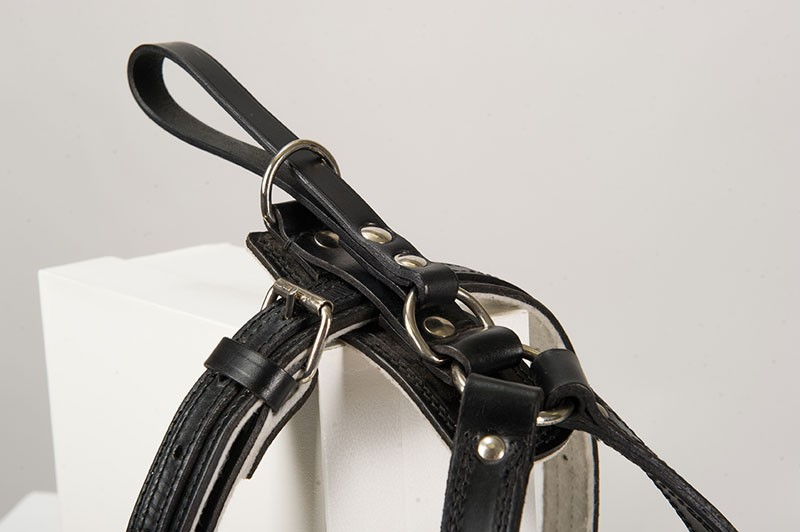 Standard leather dog harness