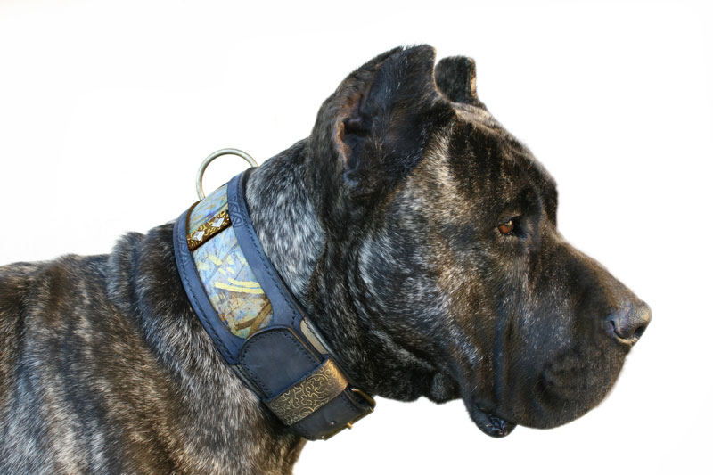 Nun - Sauri Dog Collar Dogo Canario Harakhan kennel