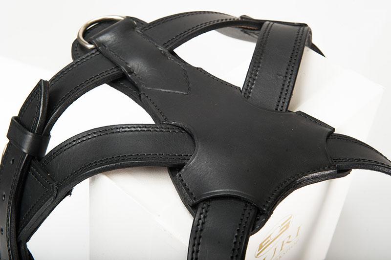 sauri harnesses