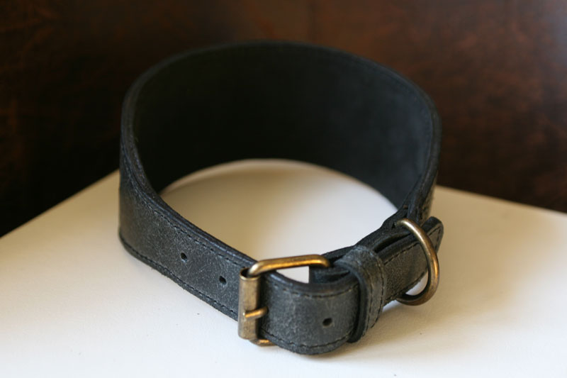 Carroll - Sauri Dog Collar
