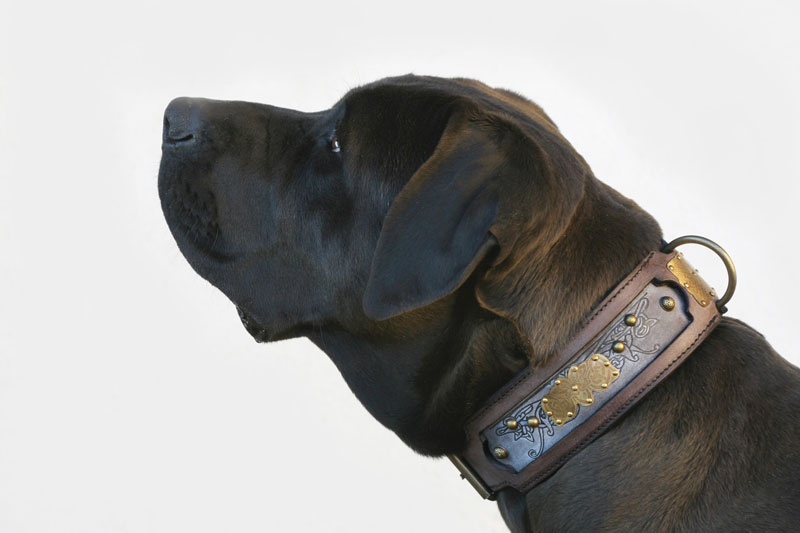 Kairos - Sauri Dog Collar Tosa Harakhan kennel