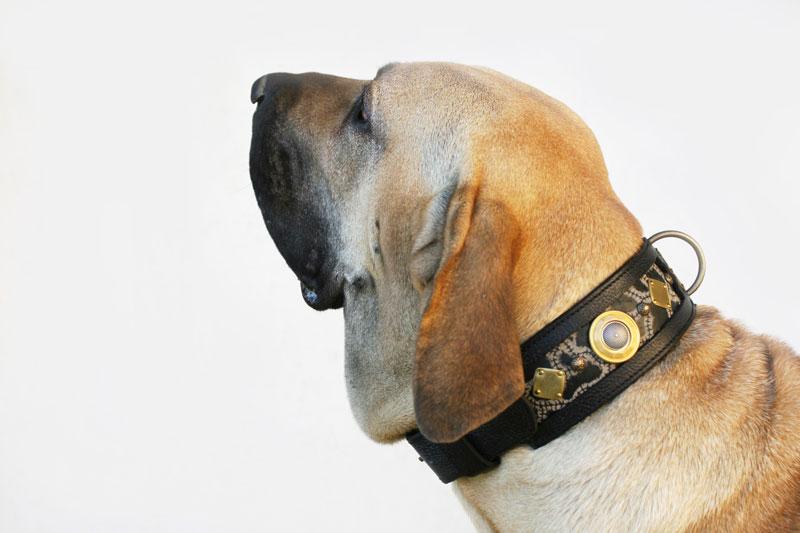 Mythos - Sauri Dog Collar Ama Harakhan Kennel