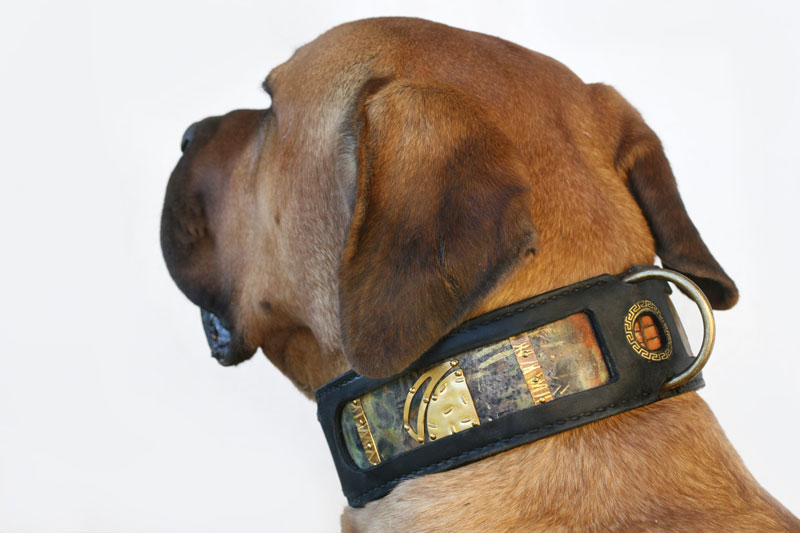 Sarga - Sauri dog collar