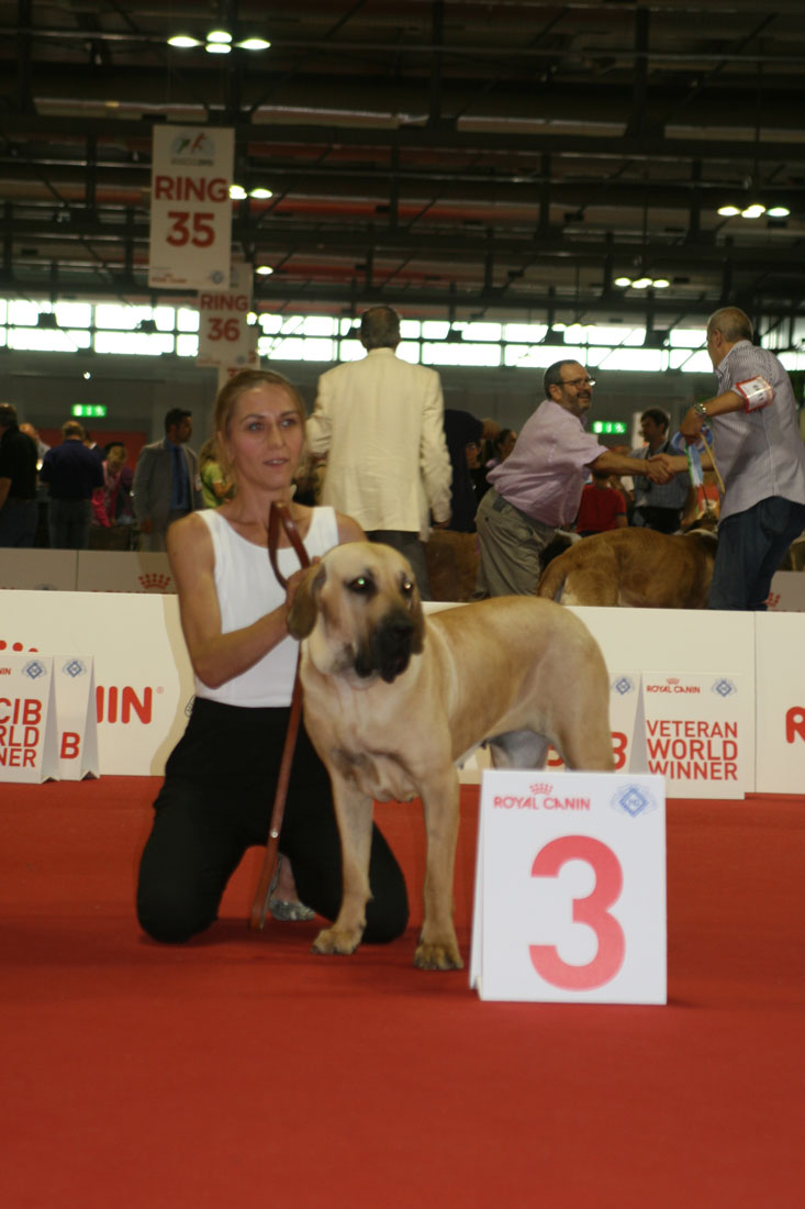 World dog show Milan 3