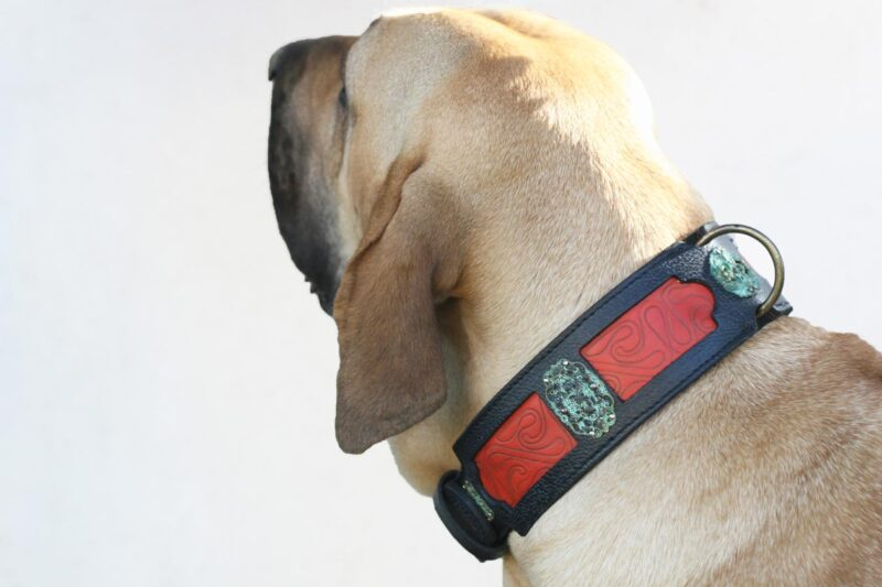 Fila Brasileiro wearing unique dog collar by Workshop Sauri
