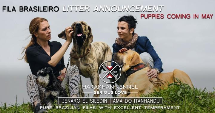 Harakhan kennel - spring litter anouncement of Fila Brasileiro