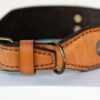 Sauri leather dog collar