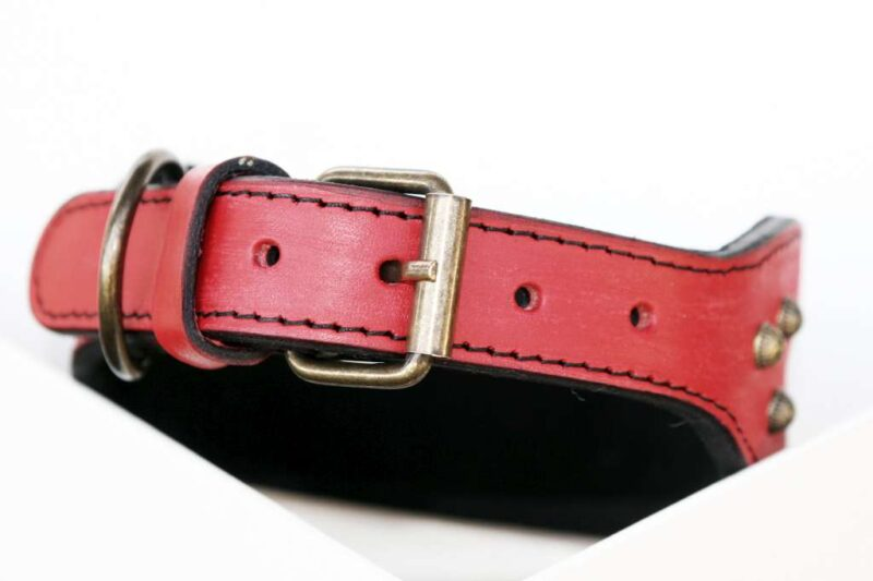 Canis Ludus - red leather dog collar buckle