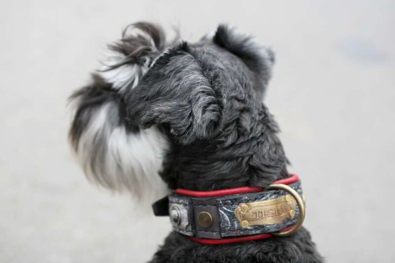 Red and grey leather dog collar handmade by workshop Sauri