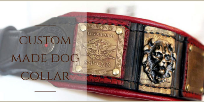 Roman inspired dog collar for American bulldog by Workshop Sauri