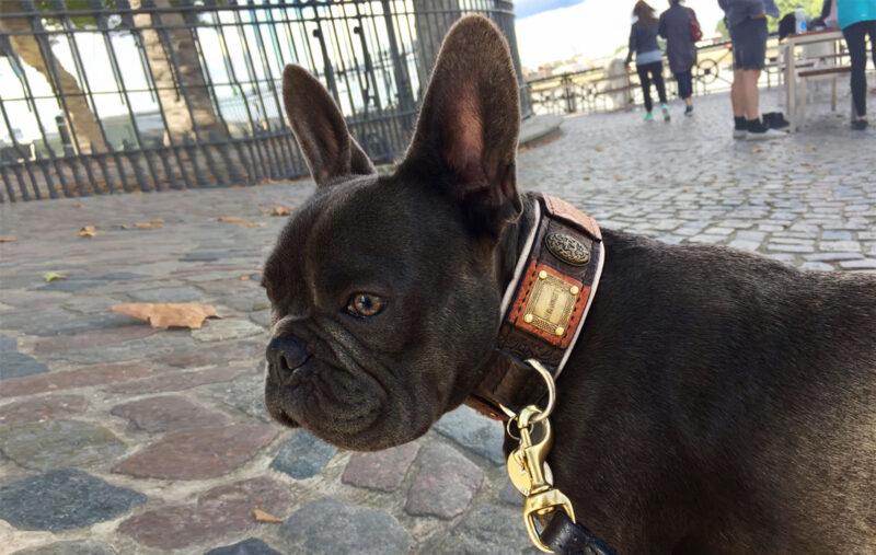 Bulldog collar by Workshop Sauri