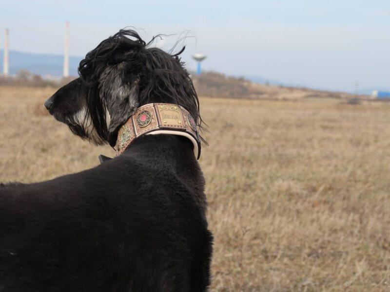 Scythia luxurious hound collar by Workshop Sauri